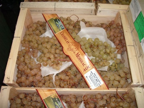 raisin-2005-aoc-014-500